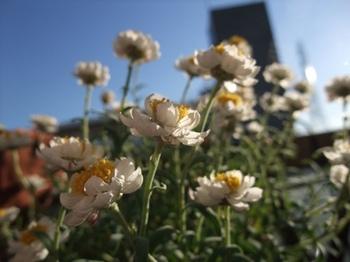 花かんざし.jpg